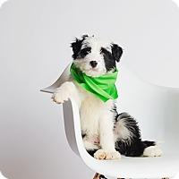 Adopt A Pet :: Oberyn - Ogden, UT