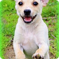 Adopt A Pet :: Alvin - Glastonbury, CT