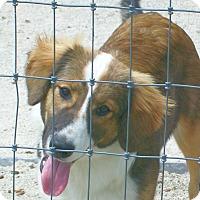 Adopt A Pet :: Fluffy - Mexia, TX