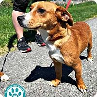 Adopt A Pet :: Terk - Kimberton, PA