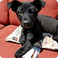 Adopt A Pet :: Betty - St. Charles, IL