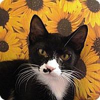 Adopt A Pet :: Kirk - Albany, NY