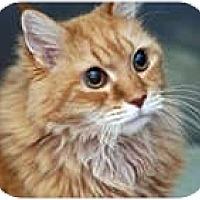 Adopt A Pet :: Benson - Columbus, OH