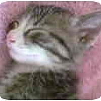 Adopt A Pet :: Leo - Proctor, MN