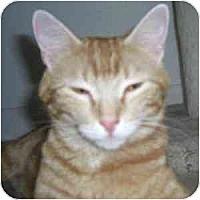 Adopt A Pet :: Izabella - Phoenix, AZ