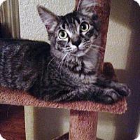 Adopt A Pet :: Ramses - Scottsdale, AZ