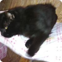 Adopt A Pet :: Dustin - Cocoa, FL