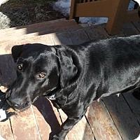 Adopt A Pet :: Willow - Toledo, OH