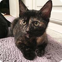 Adopt A Pet :: Pixley - Arlington/Ft Worth, TX