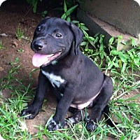 Adopt A Pet :: Chance - Natchitoches, LA