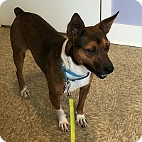 Adopt A Pet :: Kane - Youngstown, OH