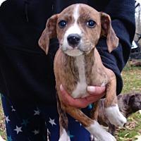 Adopt A Pet :: Jenny - Kendall, NY