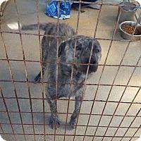Adopt A Pet :: Loui - Marianna, FL