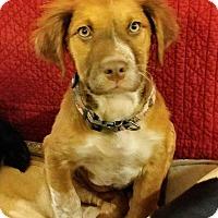 Adopt A Pet :: Clemmy - Aurora, CO