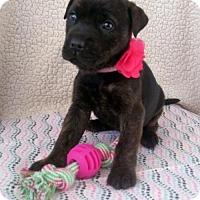 Adopt A Pet :: Nala - Newark, DE