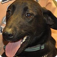 Adopt A Pet :: Harley - Osage Beach, MO