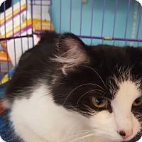 Adopt A Pet :: Ella - Flushing, MI
