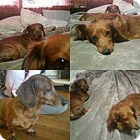 Adopt A Pet :: Michael & Jackson - Rockford, IL