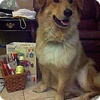 Adopt A Pet :: Buddy - Tillsonburg, ON