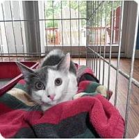 Adopt A Pet :: Trina - Warren, MI