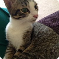 Adopt A Pet :: Spider - Monroe, GA