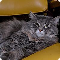 Adopt A Pet :: Primrose - Medina, OH
