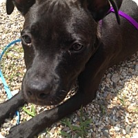Adopt A Pet :: Megan - in Maine - kennebunkport, ME