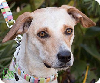 Hound (Unknown Type) Mix Dog for adoption in Savannah, Georgia - Mona