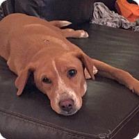 Adopt A Pet :: Heidi - Knoxville, TN