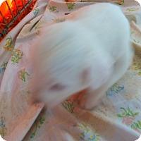 Adopt A Pet :: Casper - Katy, TX