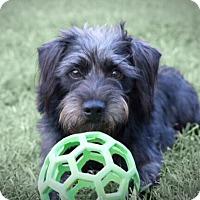 Adopt A Pet :: Mick Jagger - Austin, TX
