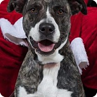 Adopt A Pet :: Cookie - Fort Myers, FL