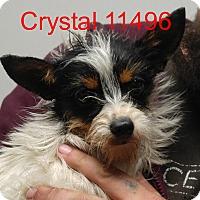 Adopt A Pet :: Crystal - Alexandria, VA