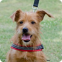 Adopt A Pet :: Huckleberry - Greenwood, SC