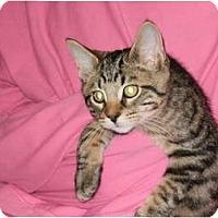 Adopt A Pet :: Packard - Sterling Hgts, MI