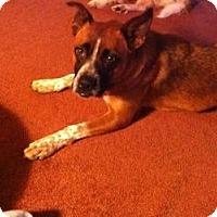Adopt A Pet :: Maddie - Hancock, MI