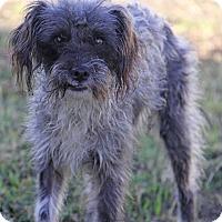 Adopt A Pet :: Charlie - Yuba City, CA