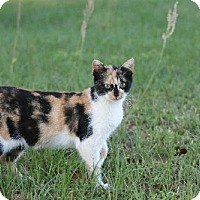Adopt A Pet :: Princess - Pensacola, FL