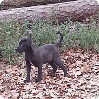 Adopt A Pet :: Jasmine - Glastonbury, CT