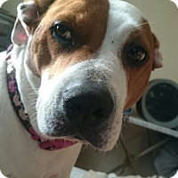 Adopt A Pet :: Lucy 2 (COURTESY POST) - Baltimore, MD