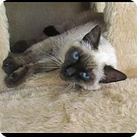 Adopt A Pet :: Baby - Gilbert, AZ