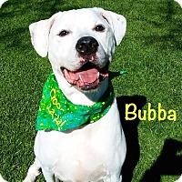 Adopt A Pet :: Bubba - El Cajon, CA