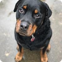 Adopt A Pet :: Rex - Pearland, TX