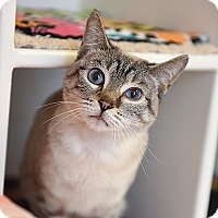 Adopt A Pet :: Aphrodite - Kanab, UT