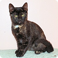 Adopt A Pet :: Cami - Morganton, NC