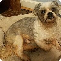 Adopt A Pet :: Max - Detroit, MI