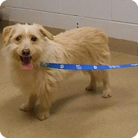Adopt A Pet :: Buddy - Wooster, OH