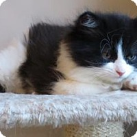 Adopt A Pet :: Ariel - Toronto, ON