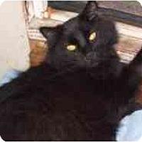 Adopt A Pet :: Churchill - Pasadena, CA