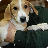 Adopt A Pet :: Doc - South Jersey, NJ